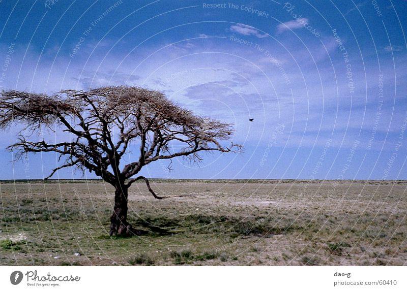 baum mit vogel Baum Savanne Steppe Horizont Ferne flach Namibia Afrika Wolken Vogel Wüste Niveau Himmel