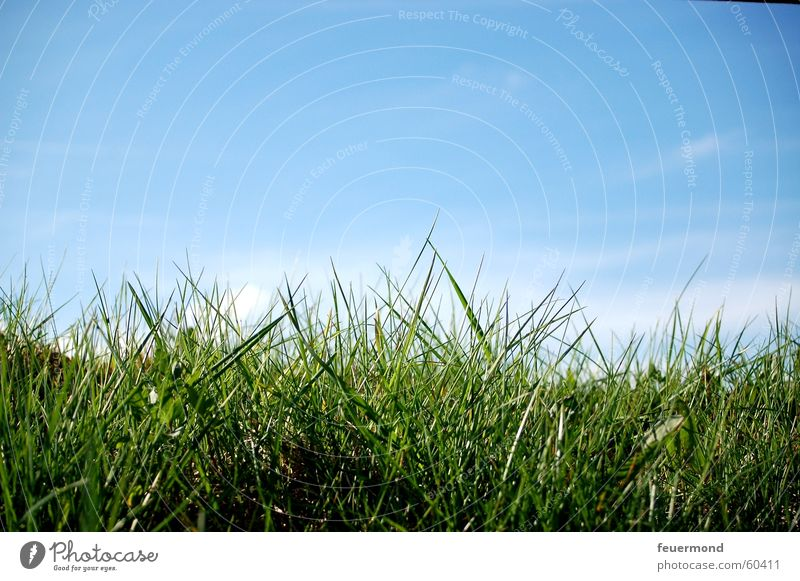 ...dem Gras beim wachsen zugucken Himmel blau grün Sonne Sommer Wolken Wiese Frühling springen Feld Wachstum Schönes Wetter Rasen
