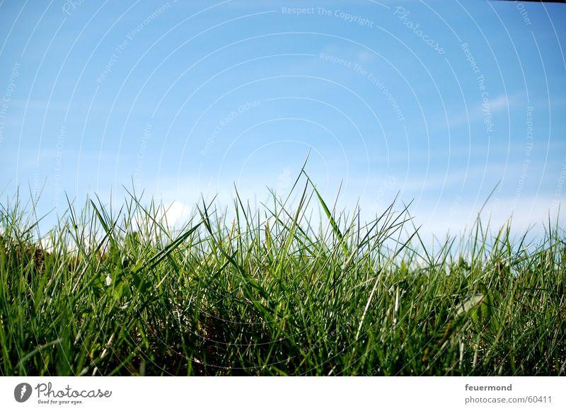 ...dem Gras beim wachsen zugucken Wiese grün Wolken Feld Sommer Frühling Wachstum springen Himmel blau Sonne Schönes Wetter Rasen grassland sun sunny sky blue