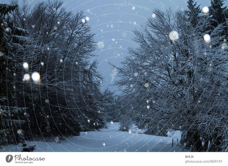 Und es hat Schnee gemacht Himmel Natur Ferien & Urlaub & Reisen blau weiß Baum Landschaft Winter Wald schwarz kalt Umwelt Schneefall Tourismus Eis