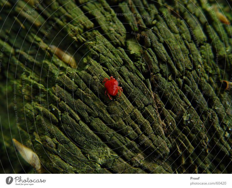 The Milbe Spinne Baum Baumrinde Tier rot grün Insekt Natur Kontrast Farbe