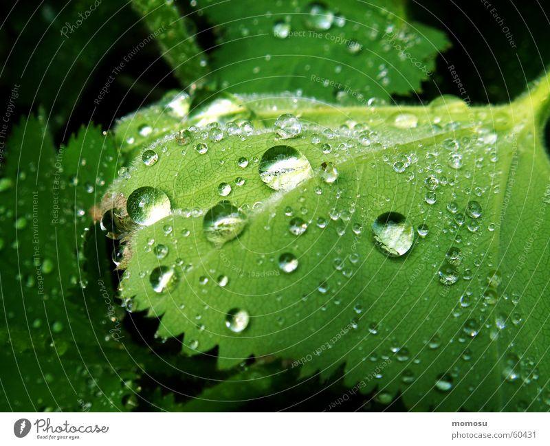 ins Grün getropft Blatt Frühling Sommer Wassertropfen Regen Seil Garten