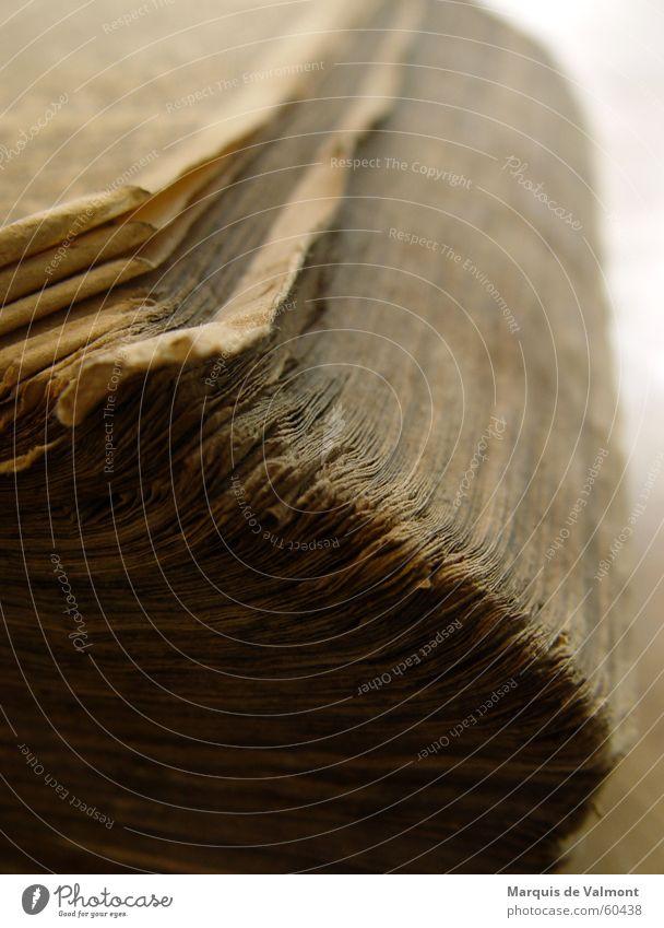 Bücherwurms Schlaraffenland alt springen Buch Papier lesen dick Falte Handwerk Seite Druck Bibel Literatur Druckerei staubig vergilbt drucken
