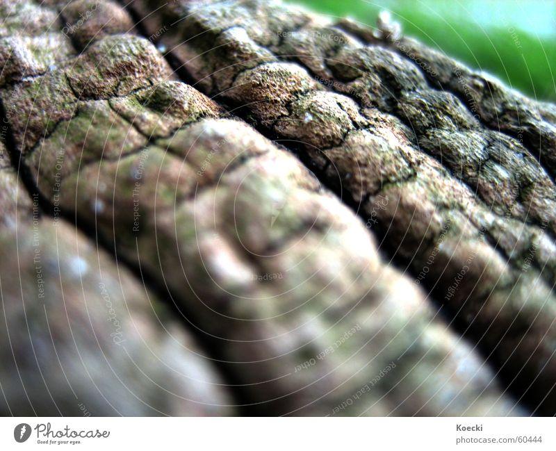 dry! Natur Baum Pflanze Tod Garten Park Umwelt trocken Baumstamm Baumrinde getrocknet Grünpflanze