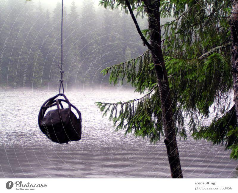 Hangman See Mummelsee Morgen Tanne Wellen Nebel Außenaufnahme Herbst Wasser wasserspiele hangman Stein Morgendämmerung Seil Landschaft