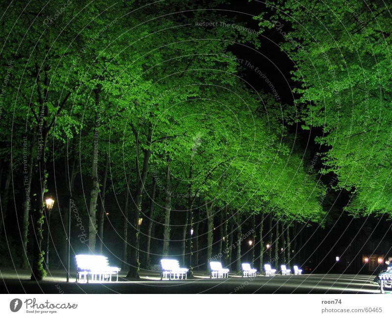 Neonbänke Hofgarten Neonbank Neonlicht Baum Nacht grün Düsseldorf Natur