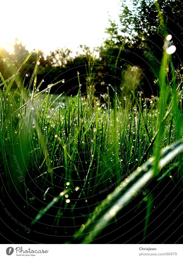 Morgentau Natur Wasser grün Baum Pflanze ruhig Erholung Wiese Leben Gras Garten Hintergrundbild Wassertropfen stehen Sträucher aufwärts