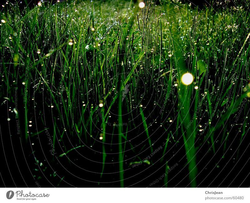 Morgentau 2 Natur Wasser grün Baum Pflanze ruhig schwarz Erholung dunkel Wiese Leben Gras Garten Hintergrundbild Wassertropfen stehen