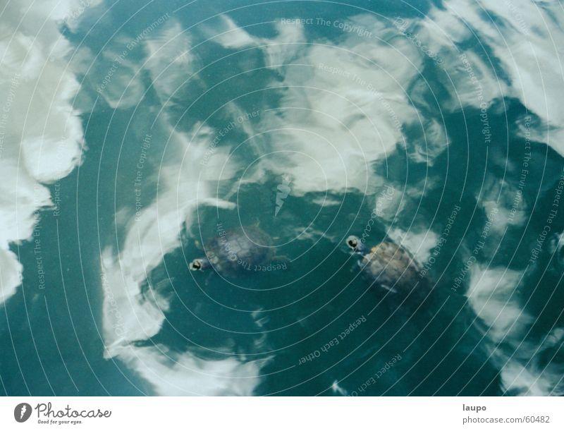 tartarugas no céu Natur