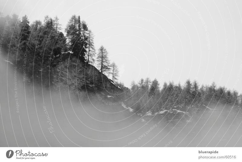 foggy forest Nebel Wald Tanne Fichte unheimlich dunkel schwarz weiß grau kalt Wolken umschließen Angst Winter Eis Himmel Wetter dunstig Rauch einhüllen