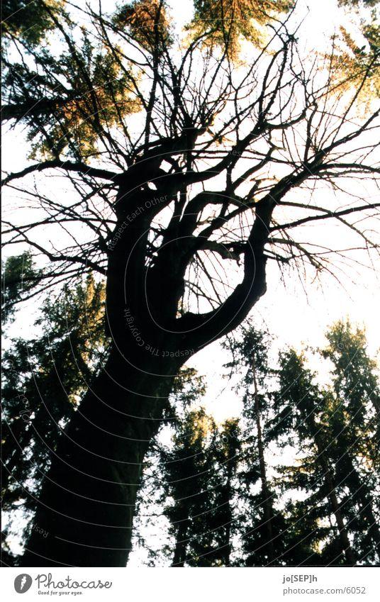 Das Dunkle im Wald Himmel Baum Blatt Holz