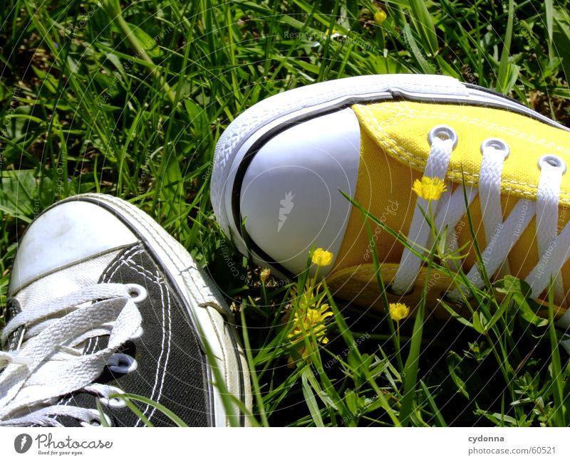 I love Chucks! Sonne Blume Wiese springen Stil Blüte Gras Frühling Schuhe Bekleidung Turnschuh Natur Umwelt kultig Schuhbänder