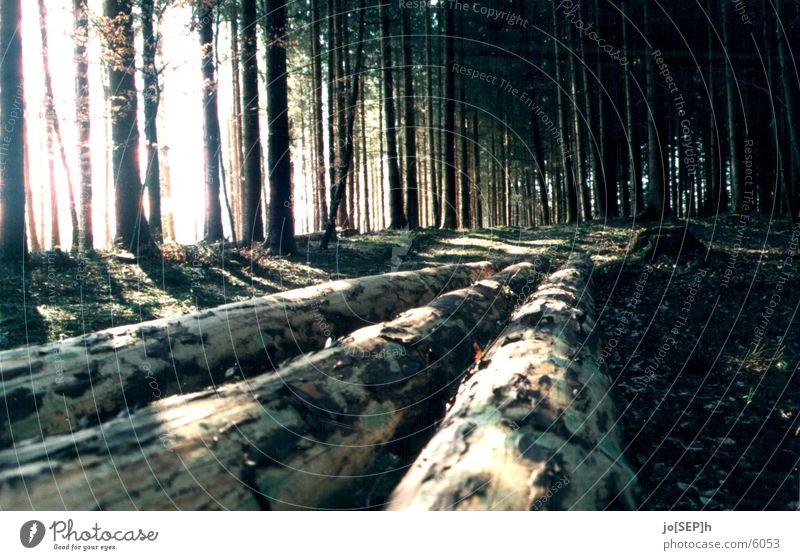 Licht ins Dunkle Baum Sonnenstrahlen Wald Baumstamm Fußweg