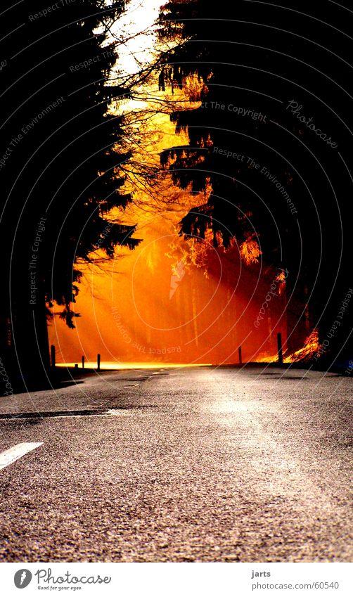 Weg ins Licht schön Sonne Straße Wald Wege & Pfade Verkehrswege Sonnenuntergang Himmelskörper & Weltall