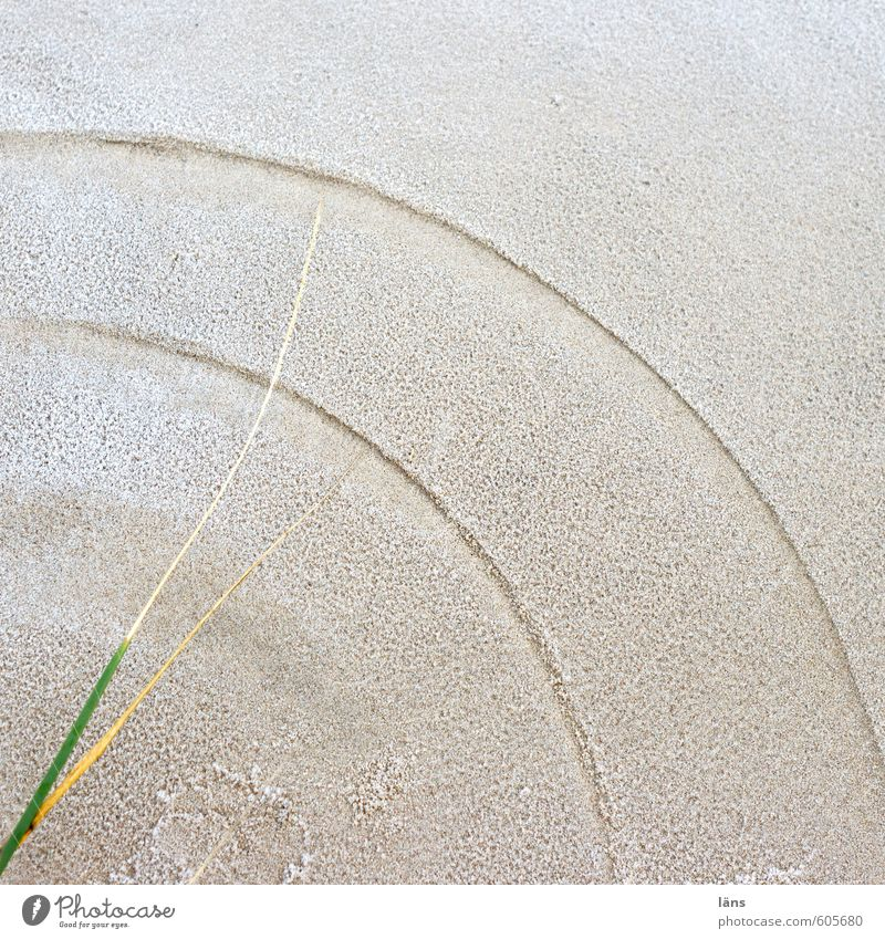 Dünen-Gras-Sand-Uhr Natur Pflanze Landschaft Winter Umwelt Bewegung Küste Zeit braun Eis Erde Insel ästhetisch