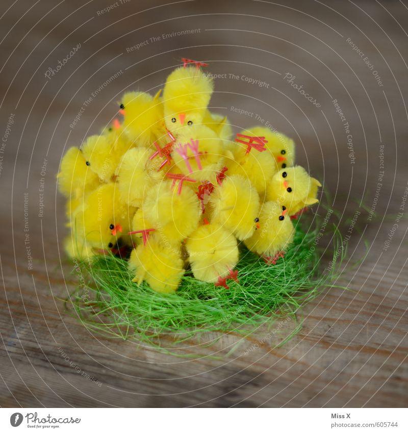 Kuschelgruppe | Vogelperspektive Tier gelb Tierjunges Gefühle lustig Frühling klein Stimmung liegen Freundschaft Zusammensein Dekoration & Verzierung