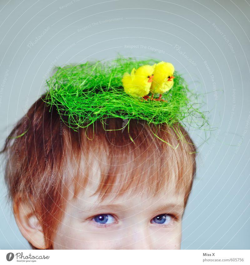Nestbau Mensch Kind Tierjunges lustig Haare & Frisuren Kopf Vogel blond Kindheit Dekoration & Verzierung verrückt niedlich Tiergruppe Ostern Kleinkind