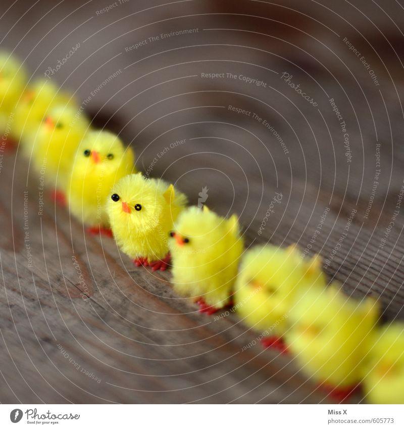 __Soldat Tier gelb Tierjunges Gefühle Holz Stimmung Vogel Kraft Dekoration & Verzierung stehen Tiergruppe Ostern Team Zusammenhalt Reihe Sitzung