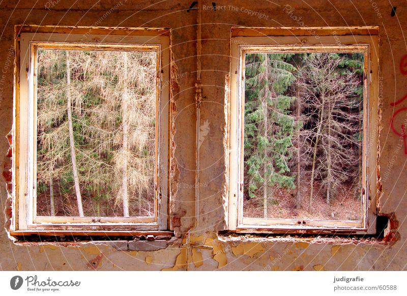 Schöne Aussicht alt grün Haus Wald Wand Fenster Mauer Gebäude 2 Raum Aussicht Hotel Verfall Putz Demontage Harz