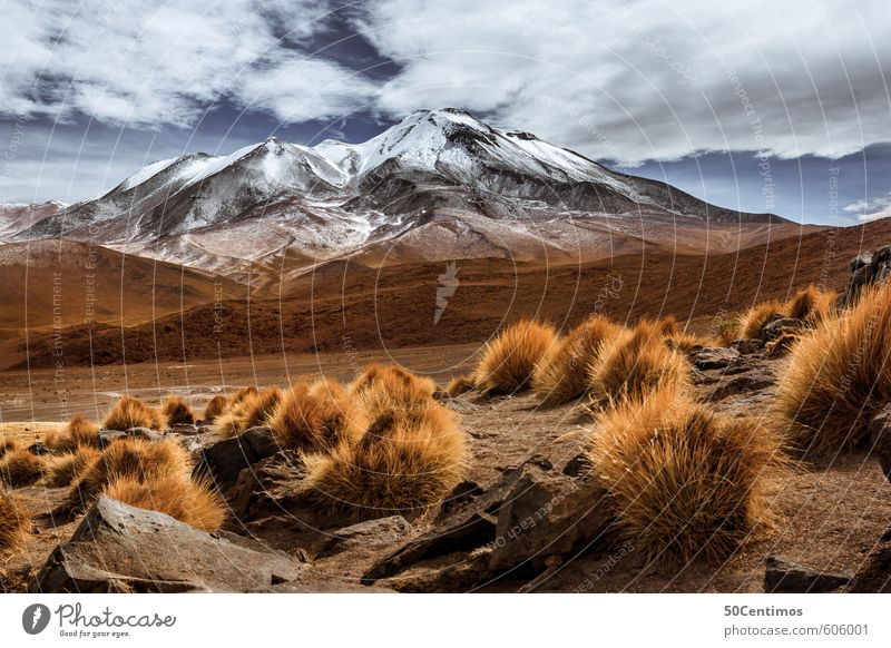 Der Gletscher in den Anden Himmel Ferien & Urlaub & Reisen Pflanze Landschaft ruhig Wolken Ferne Berge u. Gebirge Umwelt Wiese Freiheit Tourismus Wetter Klima