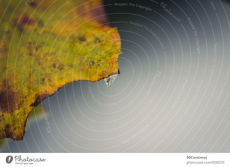 Braun Gelbes Herbstblatt Umwelt Pflanze Blatt fallen ruhig Farbfoto Gedeckte Farben Detailaufnahme Makroaufnahme