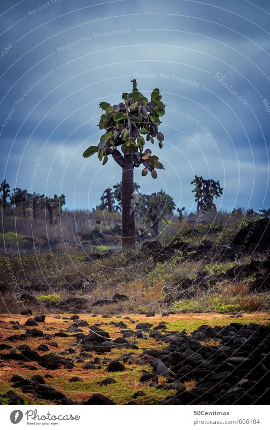 Einsamer Kaktus in Küstenlandschaft Himmel Natur Ferien & Urlaub & Reisen Pflanze Sommer Landschaft ruhig Strand Ferne Umwelt Wiese Freiheit Klima Tourismus