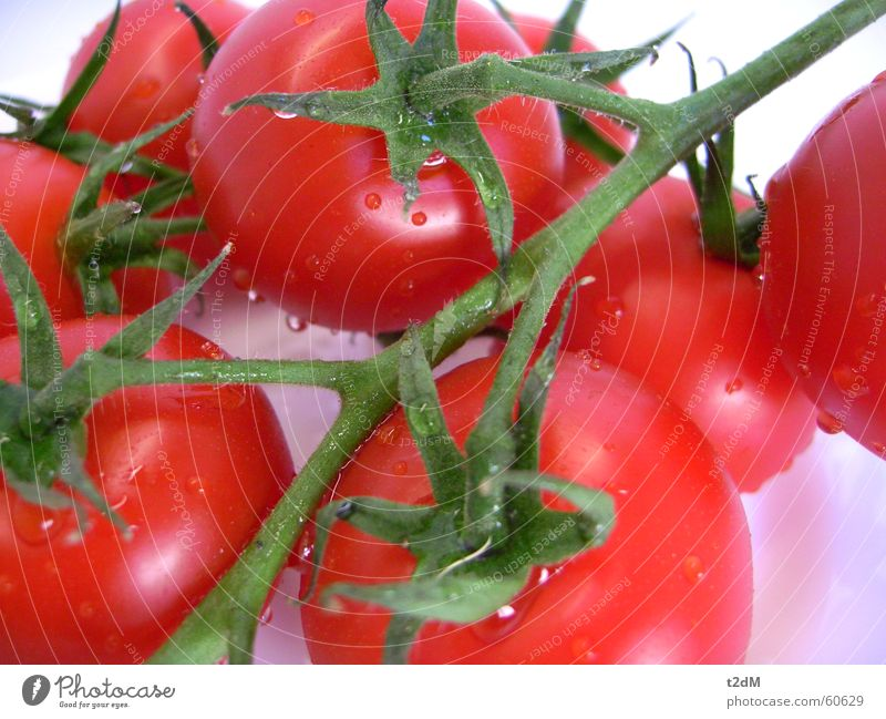 Domates Pflanze rot Sommer Gesundheit Gemüse lecker feucht Tomate saftig Saucen