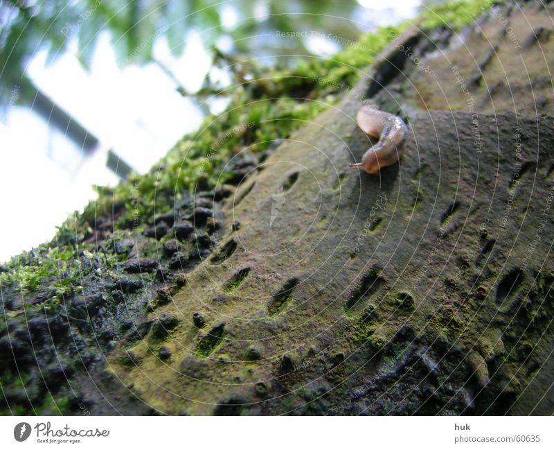 das letzte einhorn *?* Natur grün schwarz dunkel hell braun Streifen feucht Baumstamm Schnecke Fühler Echte Farne Zwitter Pore Vulkankrater