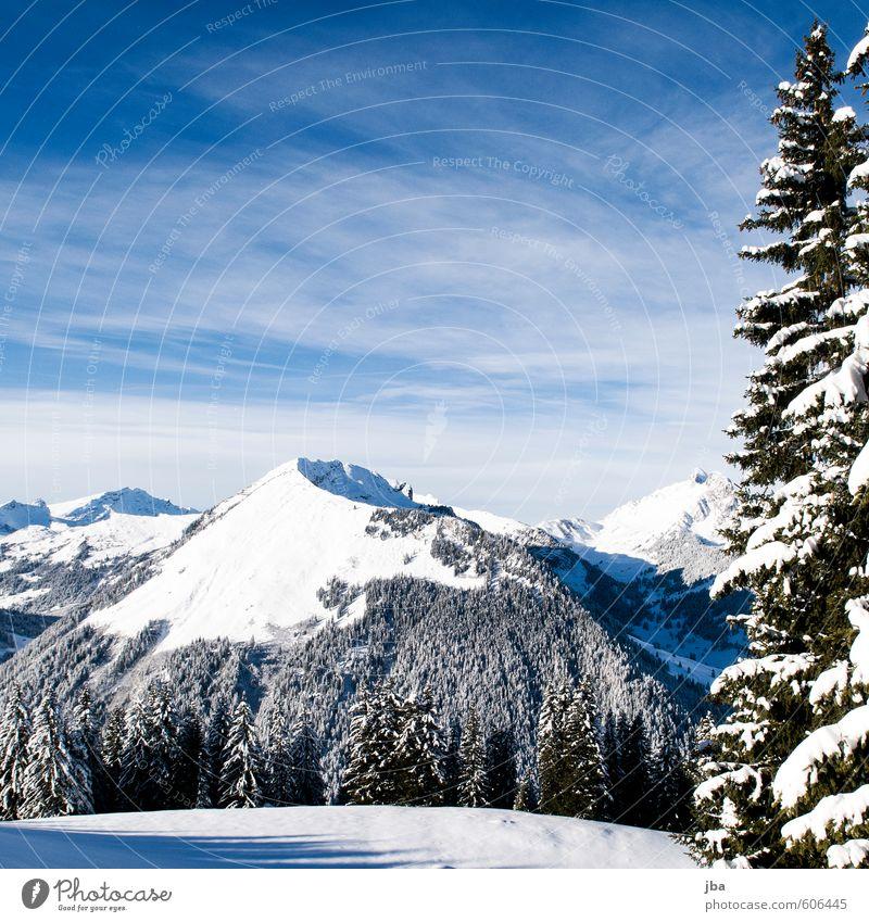 Primelod harmonisch Wohlgefühl Erholung ruhig Ausflug Freiheit Winter Schnee Berge u. Gebirge Natur Landschaft Luft Himmel Schönes Wetter Tanne Wald Alpen