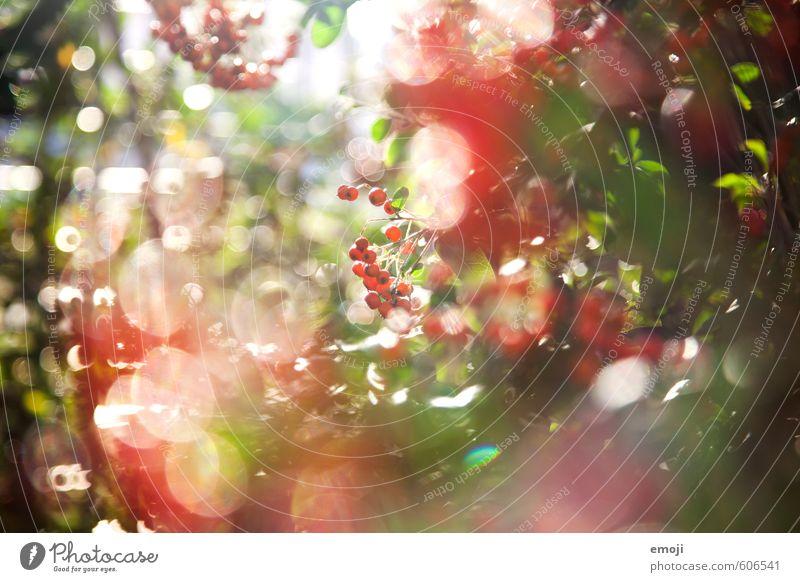redredred Umwelt Natur Pflanze Frühling Schönes Wetter Sträucher natürlich grün rot Farbfoto Außenaufnahme Nahaufnahme Menschenleer Tag Schwache Tiefenschärfe