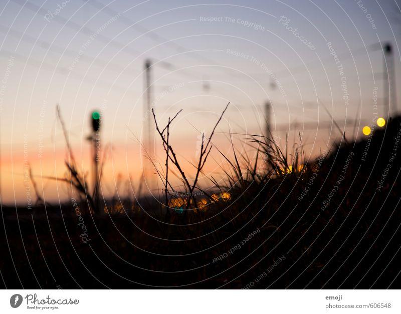 letzte Lichter Umwelt Natur Pflanze Himmel Sonnenaufgang Sonnenuntergang Gras dunkel schwarz Silhouette Farbfoto Außenaufnahme Nahaufnahme Detailaufnahme