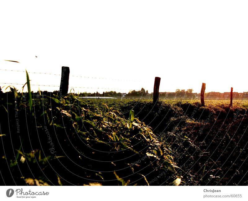 Titellos Sonne Erde Wärme Gras Feld ästhetisch Agra Feldarbeit Weide Brennnessel field Pfosten wieso sonnewärme Bodenbelag Morgen Sonnenlicht Sonnenaufgang