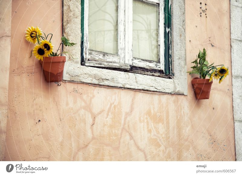 Fenster alt Pflanze Blume Haus gelb Wand Mauer Fassade Dorf Sonnenblume