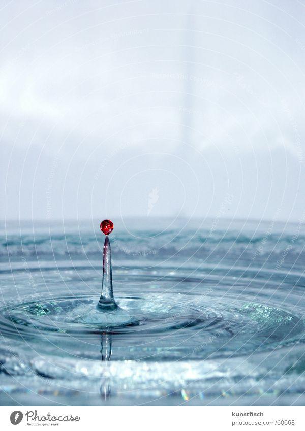 Das Tüpfchen auf dem i... Wasser blau rot Wassertropfen Kreis fallen ausbreiten