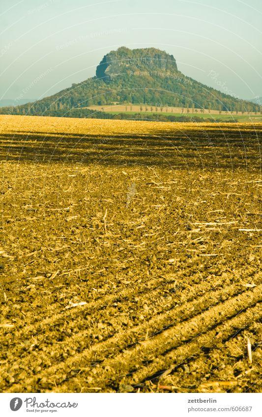 Lilienstein Ausflug Dresden Erholung Herbst Landschaft Natur Ferien & Urlaub & Reisen Sachsen Sächsische Schweiz wallroth Elbsandsteingebirge Feld