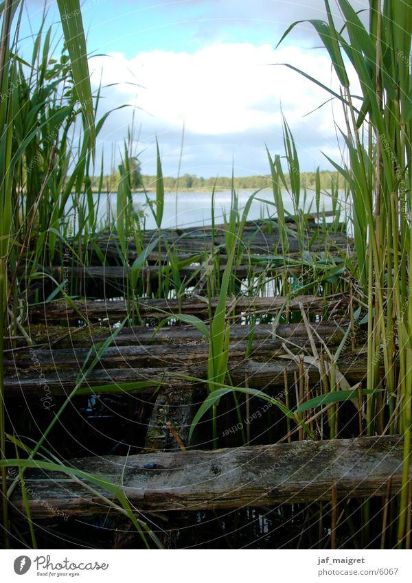 Der verfallene Steg Wasser Meer See Verfall Schilfrohr Niedersachsen