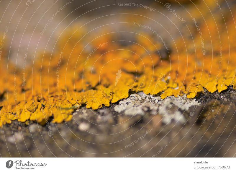 Das Gelbe vom stEIn Natur Pflanze gelb Stein Pilz