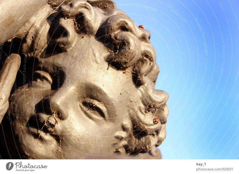 Kunst und Natur Gesicht Statue Spinne Marienkäfer Spinngewebe