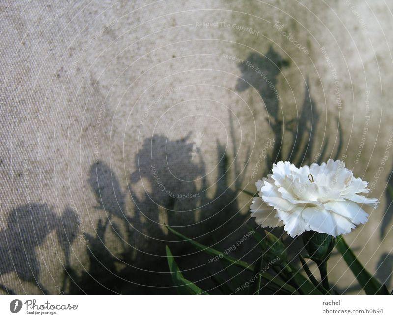 Schattenspiele Pflanze Blume Blüte Frühling weiß grün Freundlichkeit Tag Textilien Sichtschutz Balkon Staub trist grau Silhouette Gegenteil Widerspruch