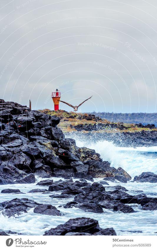 Leuchtturm in der Brandung Ferien & Urlaub & Reisen Sommer Sonne Meer Landschaft ruhig Wolken Tier Strand Ferne Umwelt Küste Freiheit Sand Felsen Vogel