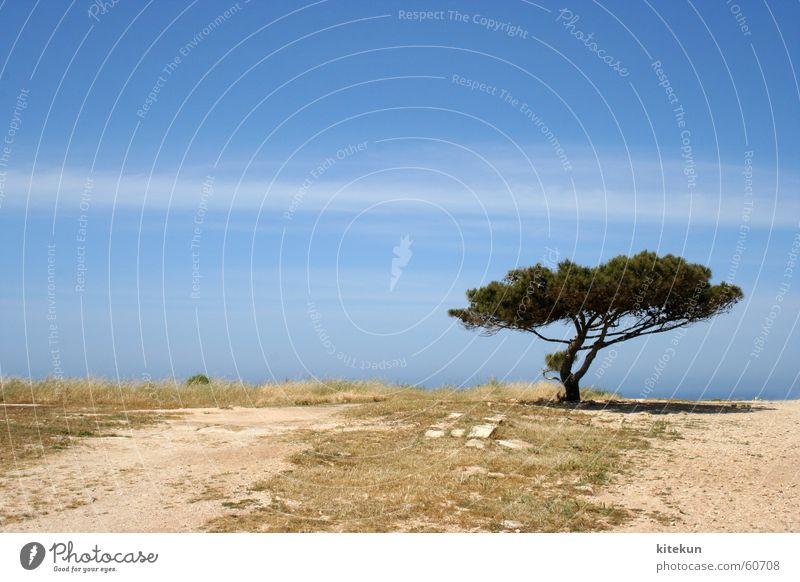 lonely baum Himmel Baum Sonne Wolken Einsamkeit Landschaft Erde leer mediterran