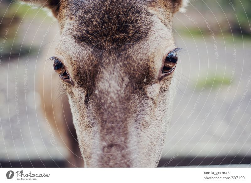 Hirschaugen Freizeit & Hobby Jagd Ferien & Urlaub & Reisen Ausflug Abenteuer Umwelt Natur Tier Wildtier Tiergesicht Zoo Streichelzoo 1 füttern exotisch
