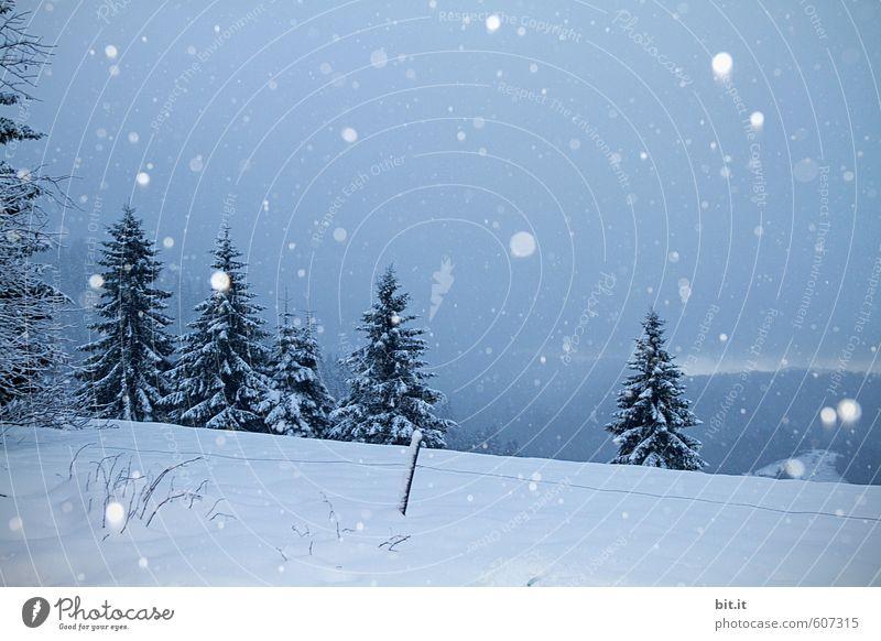 Wetter | Schneefall in den Höhen ruhig Ferien & Urlaub & Reisen Tourismus Umwelt Natur Winter Klima Eis Frost Baum Wald Berge u. Gebirge Gipfel kalt blau weiß