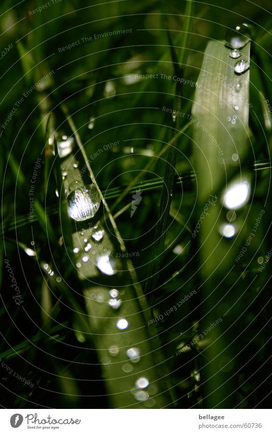 wasserperlen grün Wasser Wiese Gras Regen Wassertropfen