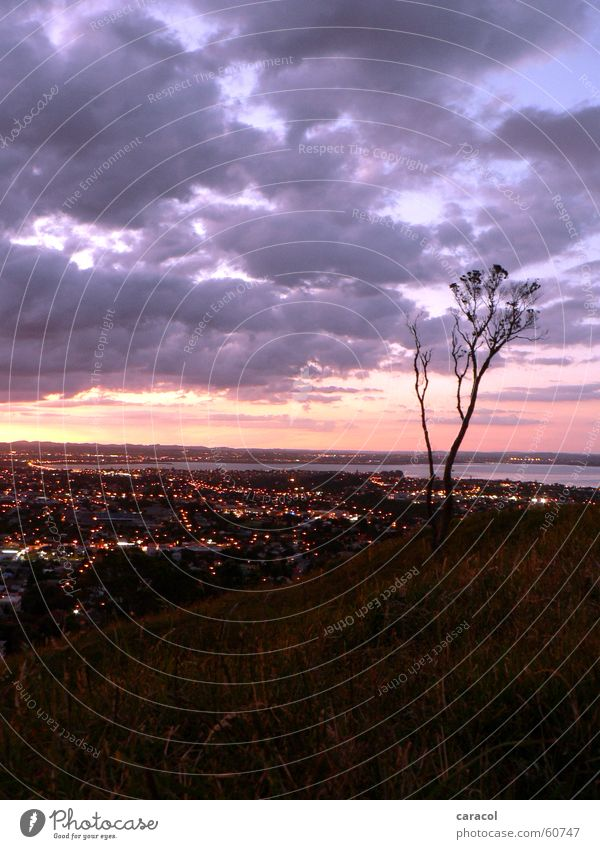 Suburbia Baum Stadt Wolken rosa violett Neuseeland Auckland Mount Eden