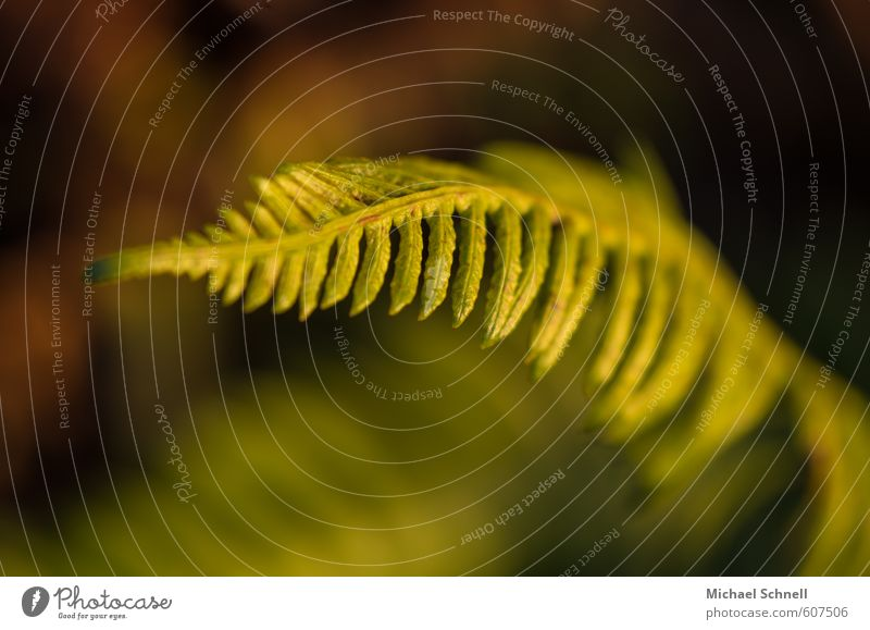 Farn Natur grün Pflanze ruhig Wärme zart Farnblatt