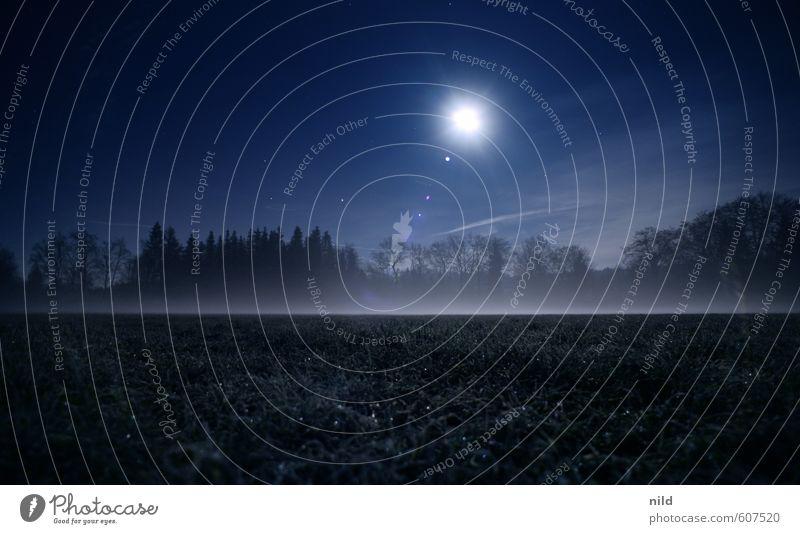 Nebelfeld Umwelt Natur Landschaft Himmel Nachthimmel Mond Herbst Winter Wetter Eis Frost Wiese Feld dunkel gruselig kalt blau Angst Farbfoto Außenaufnahme