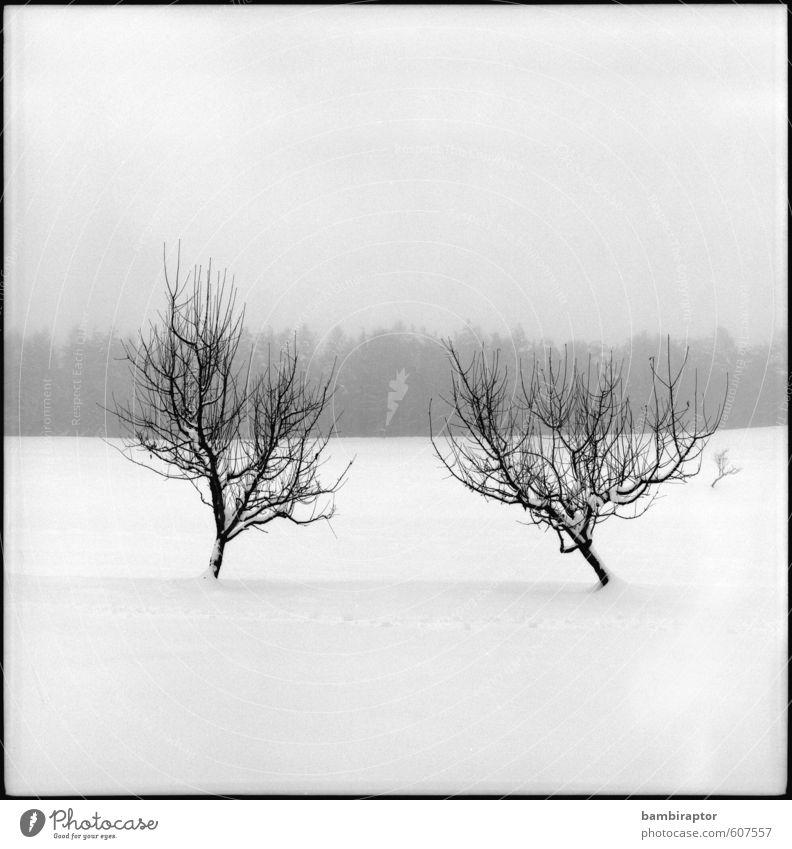 Verspätung Winter Schnee Umwelt Natur Landschaft Pflanze Wetter Baum kalt weiß Schneelandschaft Kontrast analog Schwarzweißfoto Außenaufnahme Menschenleer