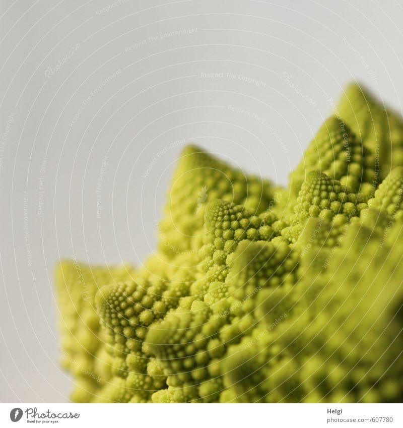 echt | lecker Lebensmittel Gemüse Romanesco Ernährung Bioprodukte Vegetarische Ernährung ästhetisch außergewöhnlich frisch Gesundheit natürlich grau grün bizarr