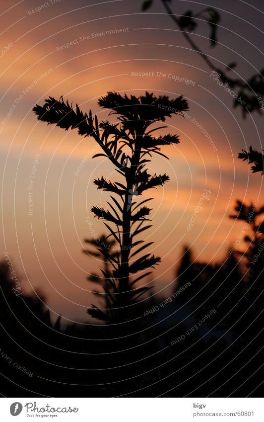 Möchtgernbaum rot Wolken Zweig